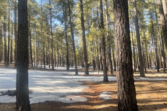 Payson/Pine to Flagstaff